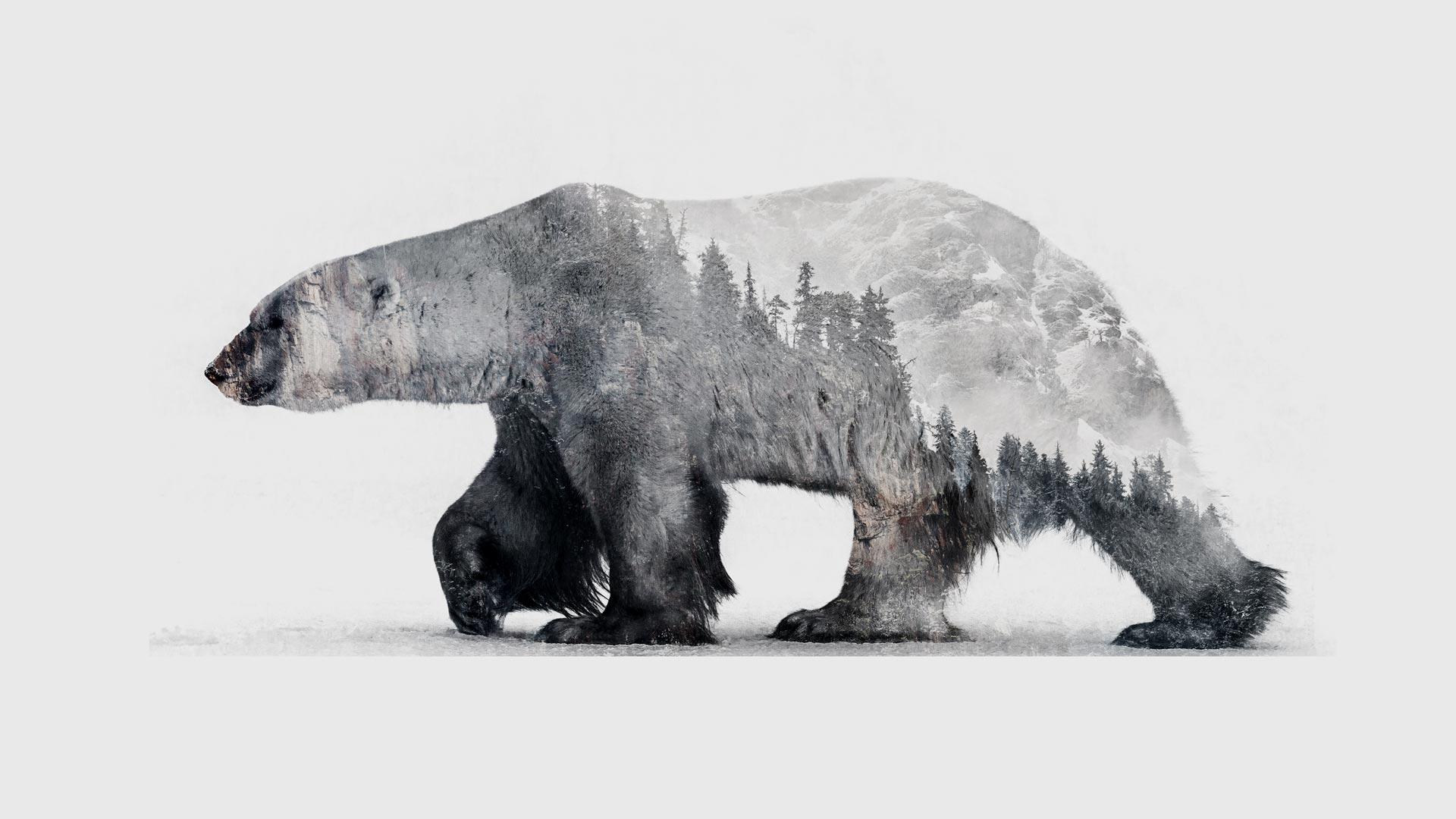 Animals & Environments polarbear slider