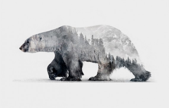Animals & Environments animals feat 570x367