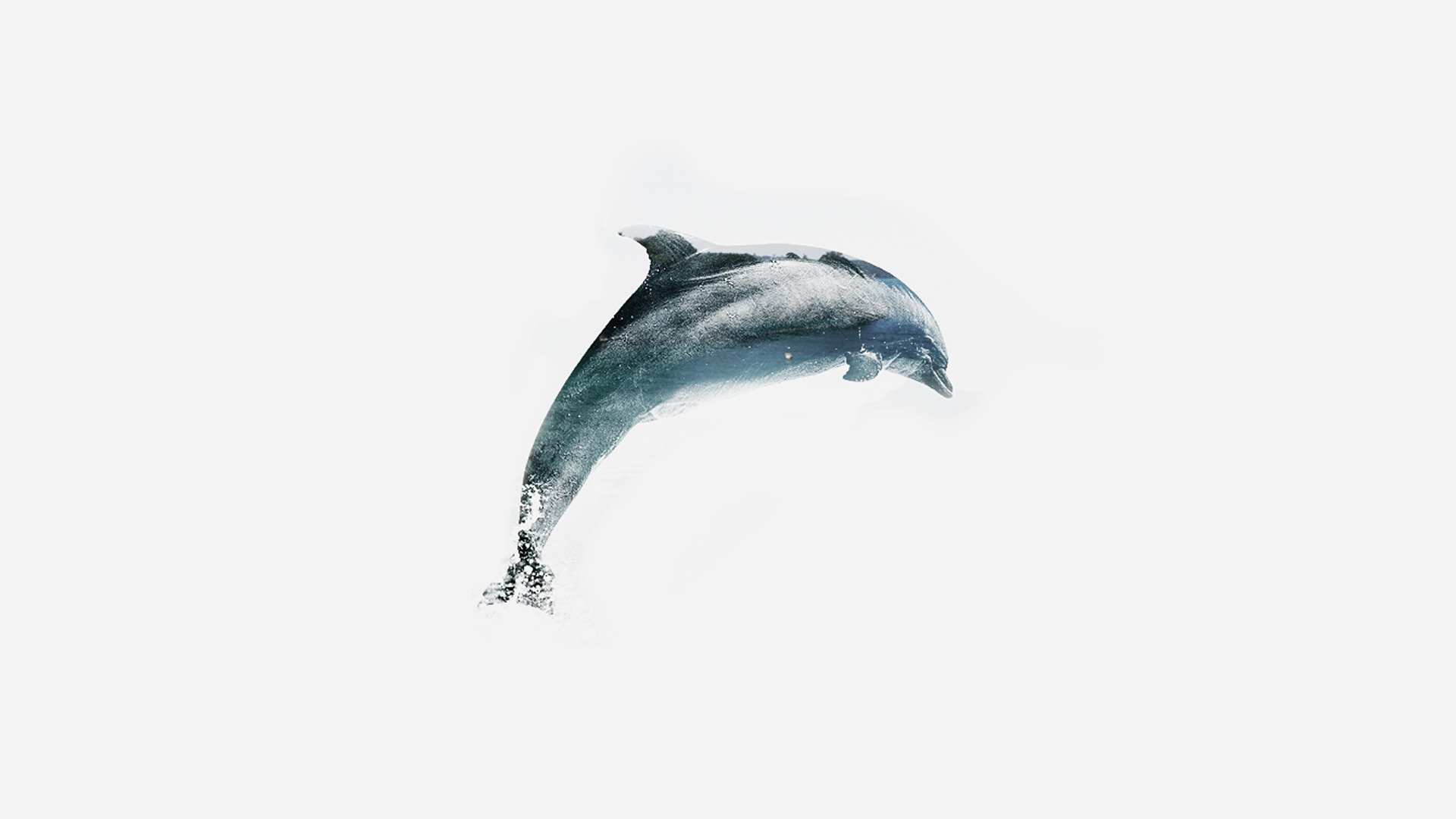 Animals & Environments dolphin1