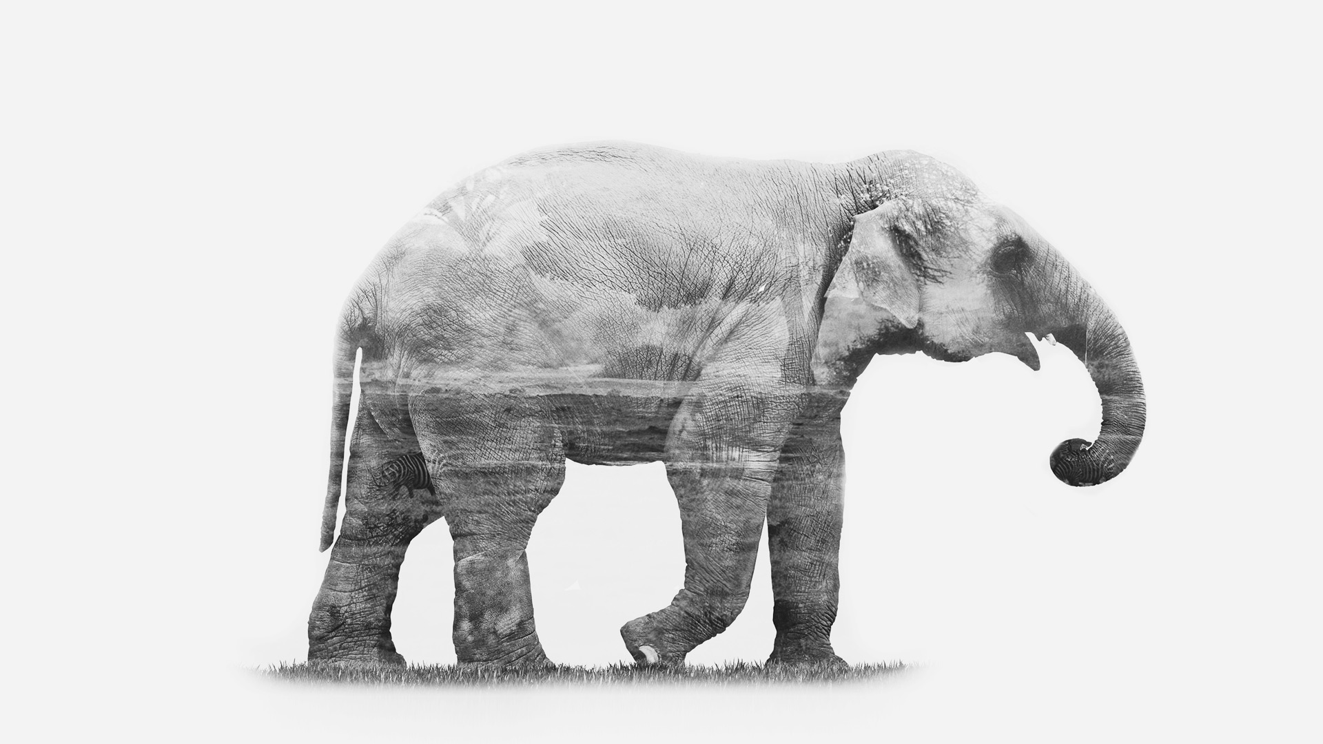 Animals & Environments elephant